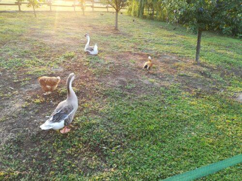 Fauna Selvatica giornata mondiale