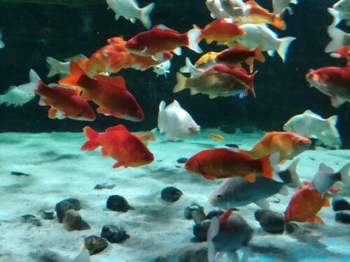 Migrazione dei Pesci giornata mondiale