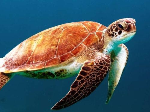 Tartarughe marine giornata mondiale