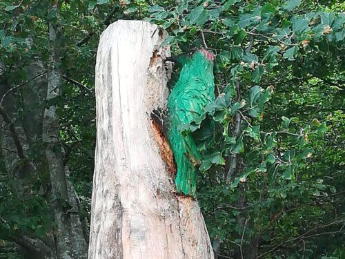 Conservazione della natura 28 luglio