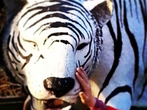 Tigre 29 luglio giornata mondiale
